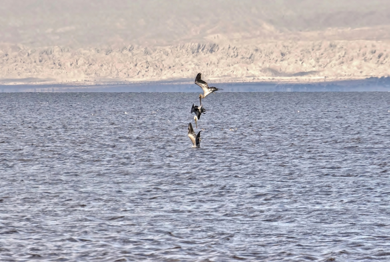 3 Divers Salton Sea Beach