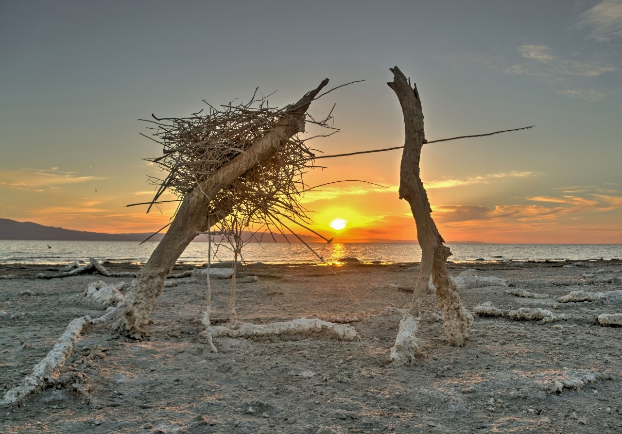 Salton Sea Nest